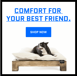 a dog laying in a Keetsa dog bed looking happy